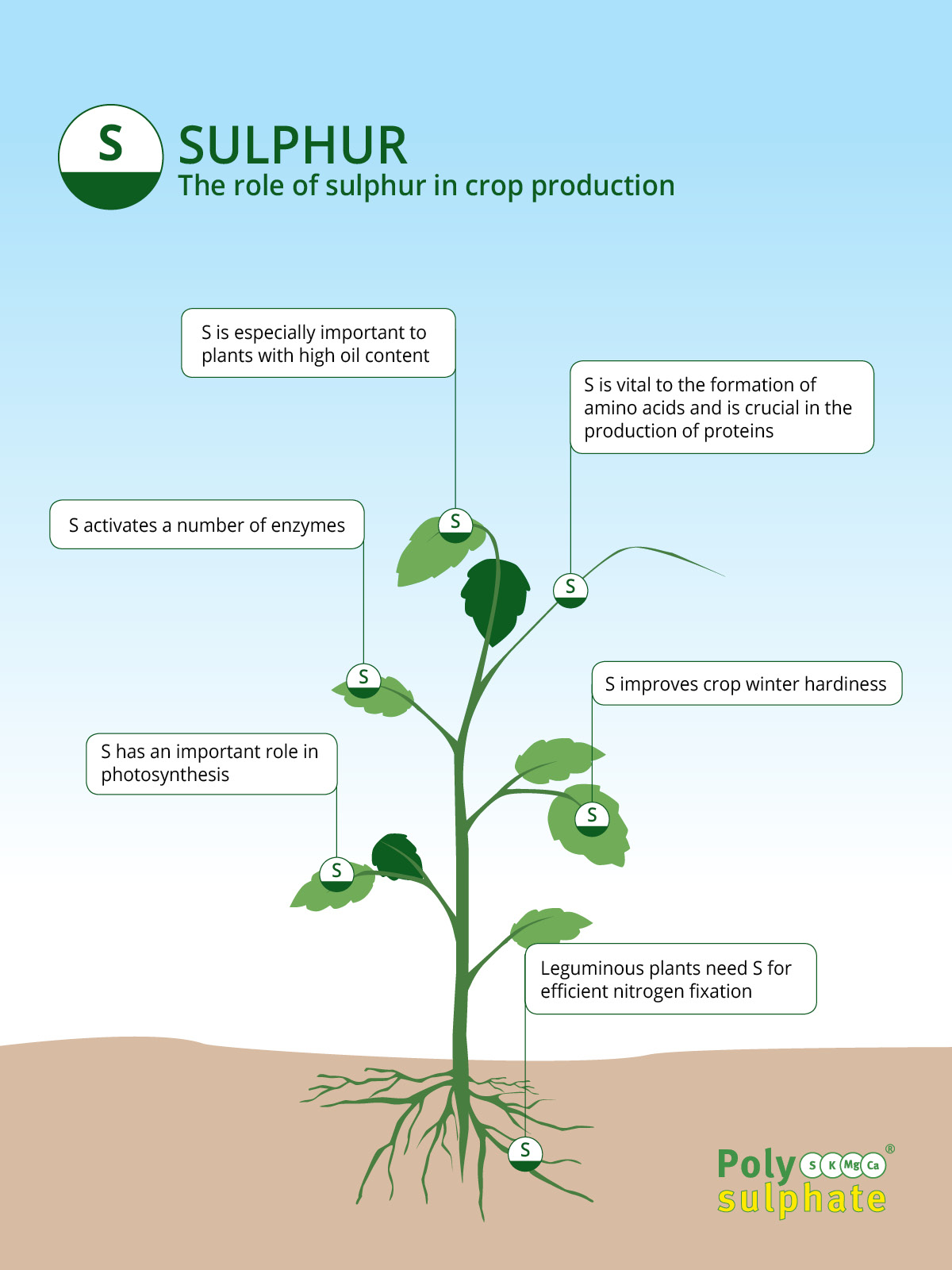 The role of sulphur in crops