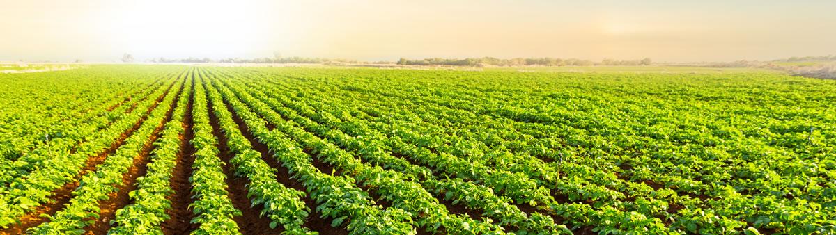 Fertilizers and plant nutrition solutions | ICL Fertilizers